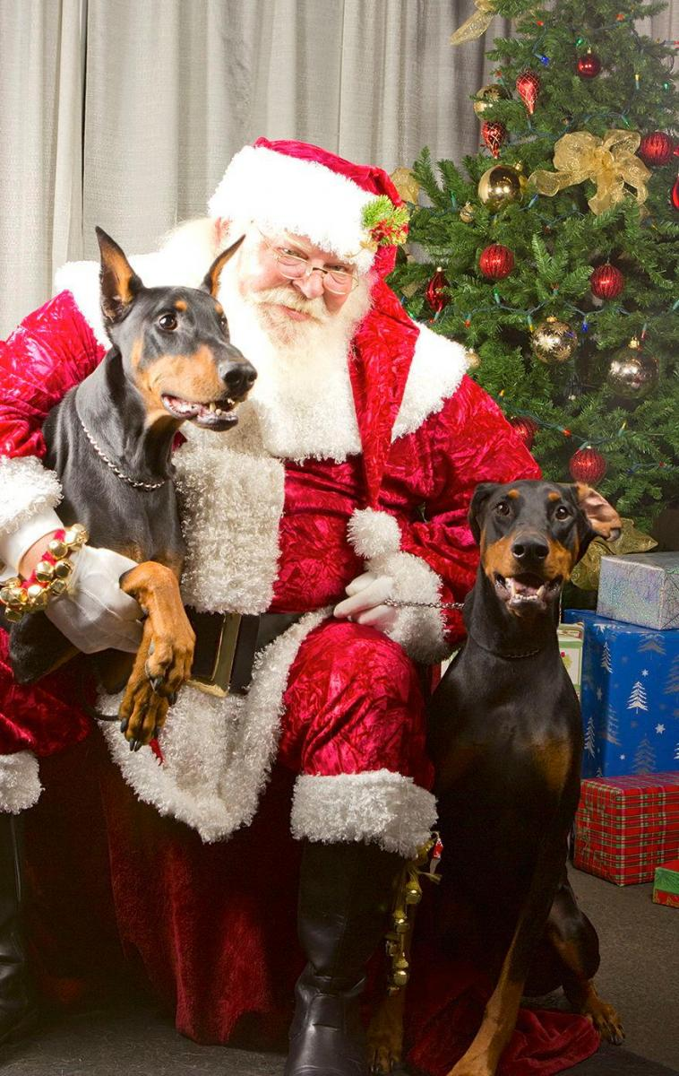 2014 Dobermantalk Calendar December Entries - Holiday Dobes-706001_10101994565816011_17960170_o.jpg