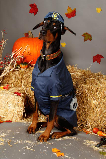 Click image for larger version Name Animal Aid Halloween.JPG Views 10789 Size & DT Halloween Costume Contest: Enter your Dobes Here! - Doberman ...