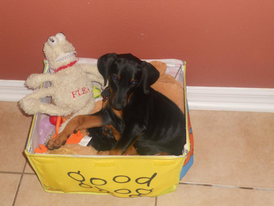 Greetings from Nitro in Winter Garden, FL-asleep-toy-box.jpg
