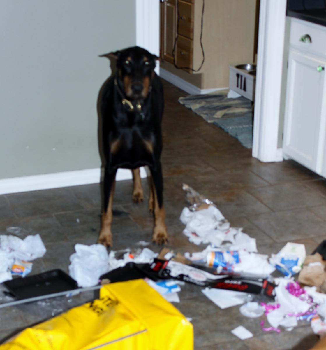 What do you wish you knew when you first got your pup?-bad.jazz.shred.recyle.jpg