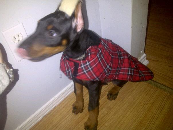 Puppies...*sigh*-brucecoat.jpg