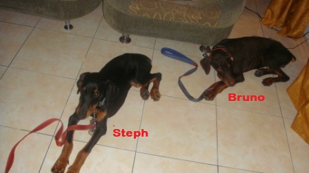 Absolutely excellent article on littermate syndrome-bruno-n-steph.jpg