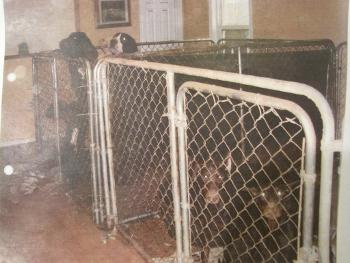 Canis Maximus - Humane Investigator Report (Part 1 of 2)-cm1.jpg