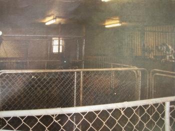Canis Maximus - Humane Investigator Report (Part 1 of 2)-cm3.jpg