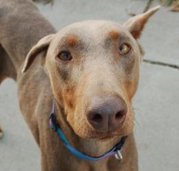 Oakland Park Dog Rescue