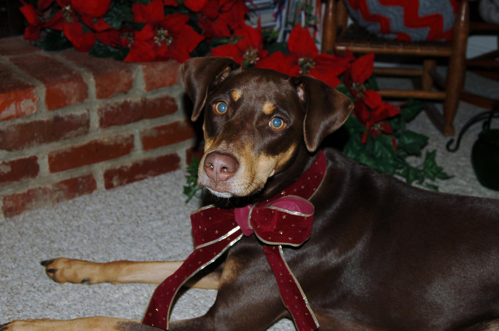 New with Dobie Mix-georgia-christmas-2012.jpg