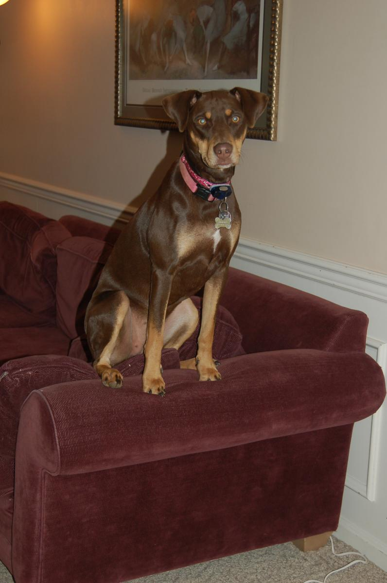 New with Dobie Mix-georgia.jpg