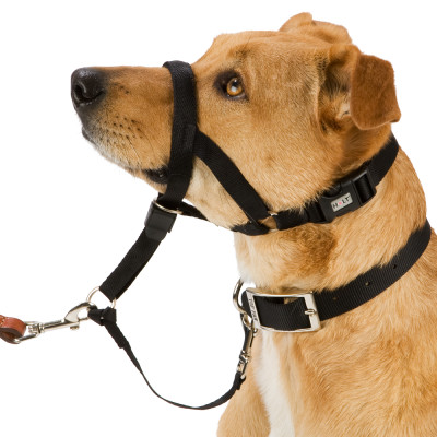 Dog Training Head Collar Halter Lead