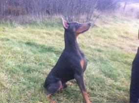 How big is your pup?-imageuploadedbypg-free1355165198.865997.jpg