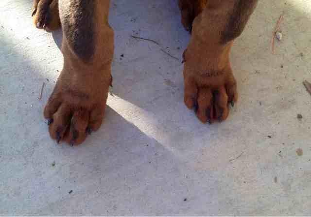 Dodgers feet-imageuploadedbypg-free1355870275.025821.jpg