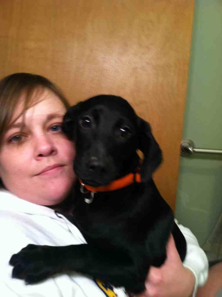 New puppy dislikes my dobe-imageuploadedbypg-free1356284421.578202.jpg