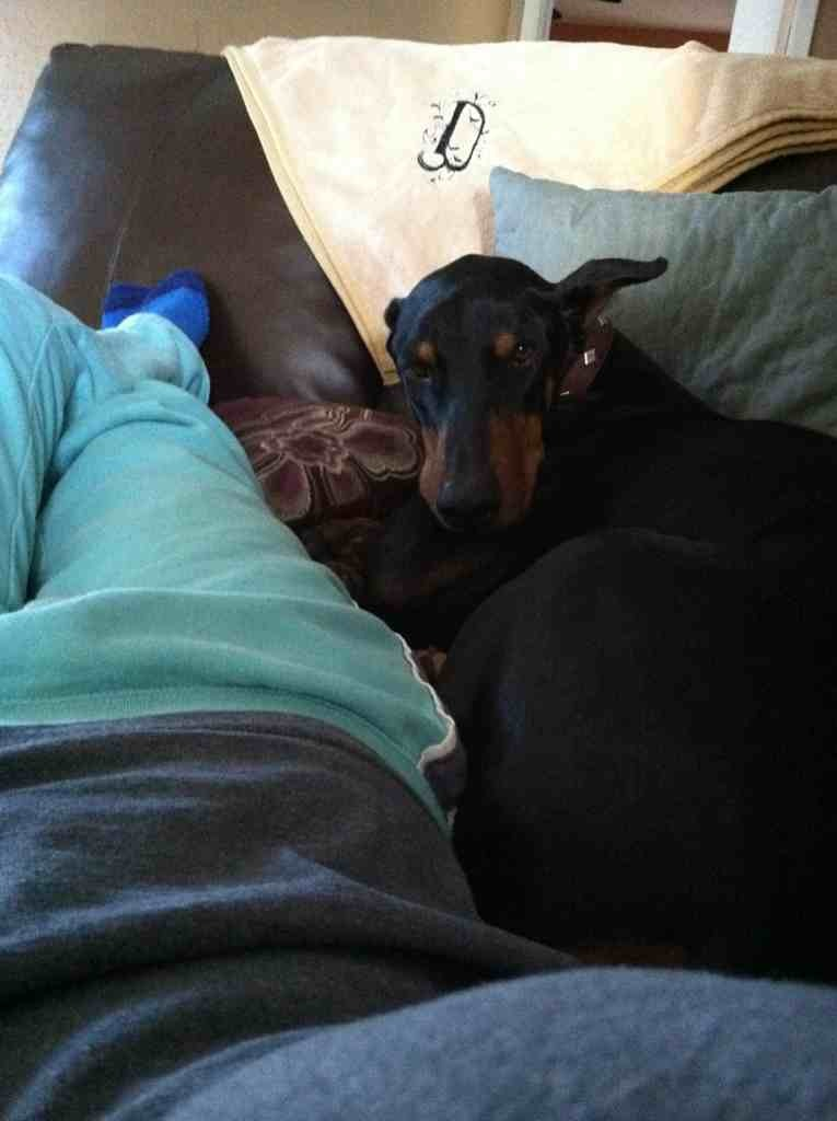 How does your dobie act when your are sick?-imageuploadedbypg-free1357317056.897919.jpg