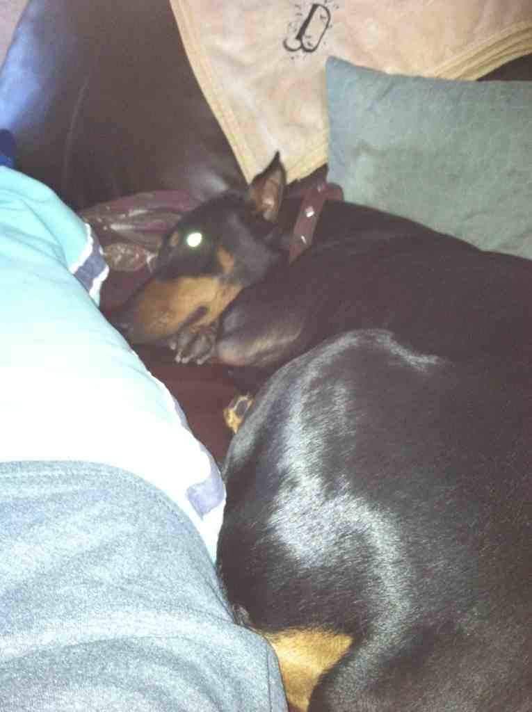 How does your dobie act when your are sick?-imageuploadedbypg-free1357317071.666922.jpg