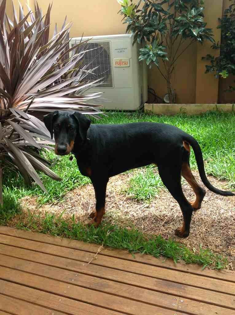 Aussie aussie aussie-imageuploadedbypg-free1358506152.692247.jpg