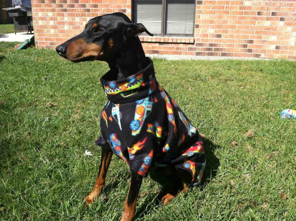 Pictures of what your dogs wear-imageuploadedbypg-free1358986181.602992.jpg