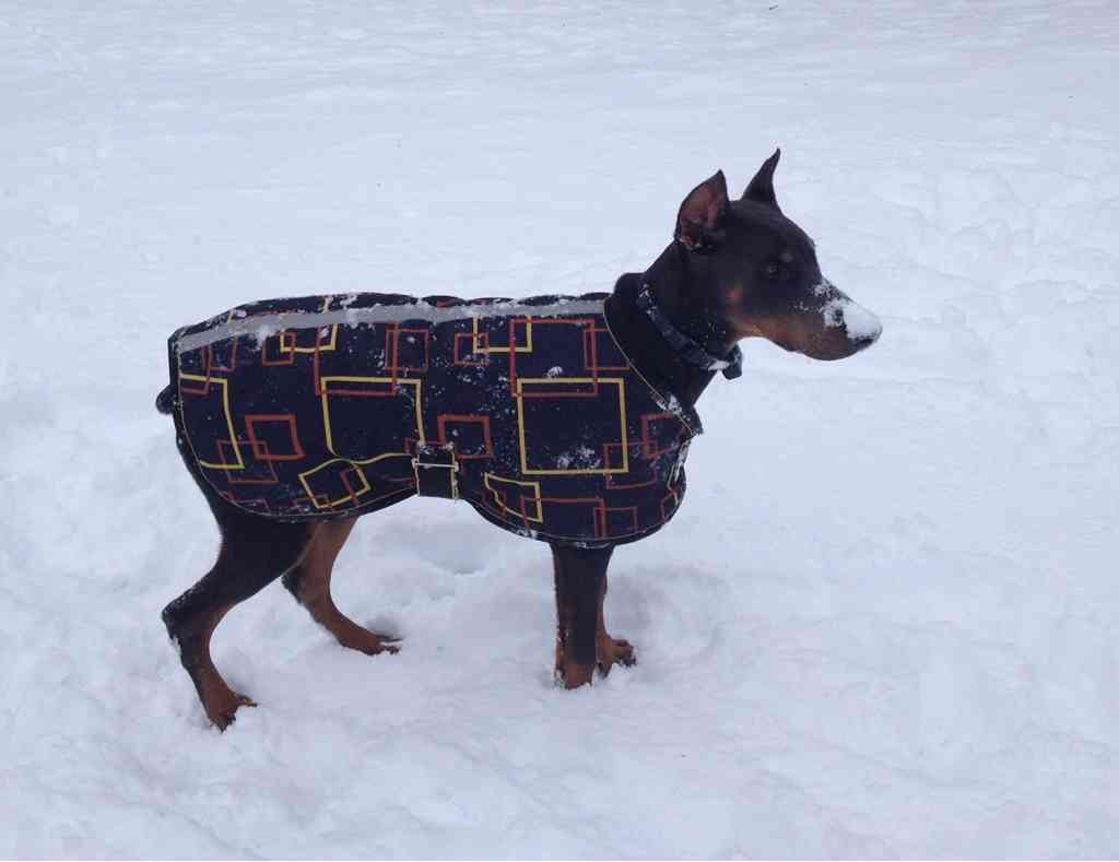 Pictures of what your dogs wear-imageuploadedbypg-free1358990334.820604.jpg