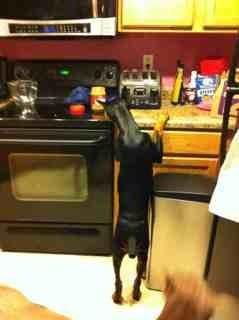 High drive puppy-help!-imageuploadedbypg-free1363408822.706170.jpg