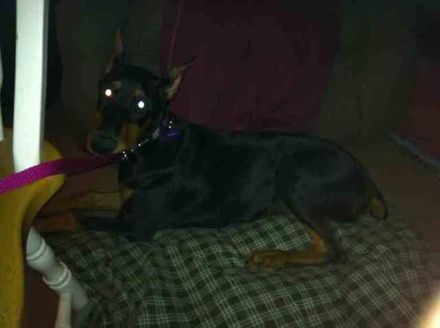 High drive puppy-help!-imageuploadedbypg-free1363662436.662312.jpg