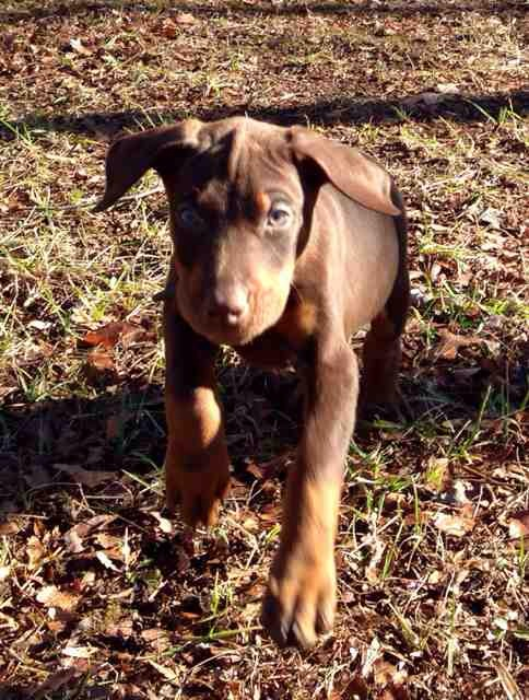 Dobie is not coming when we call him by his name?-imageuploadedbypg-free1388518951.662070.jpg