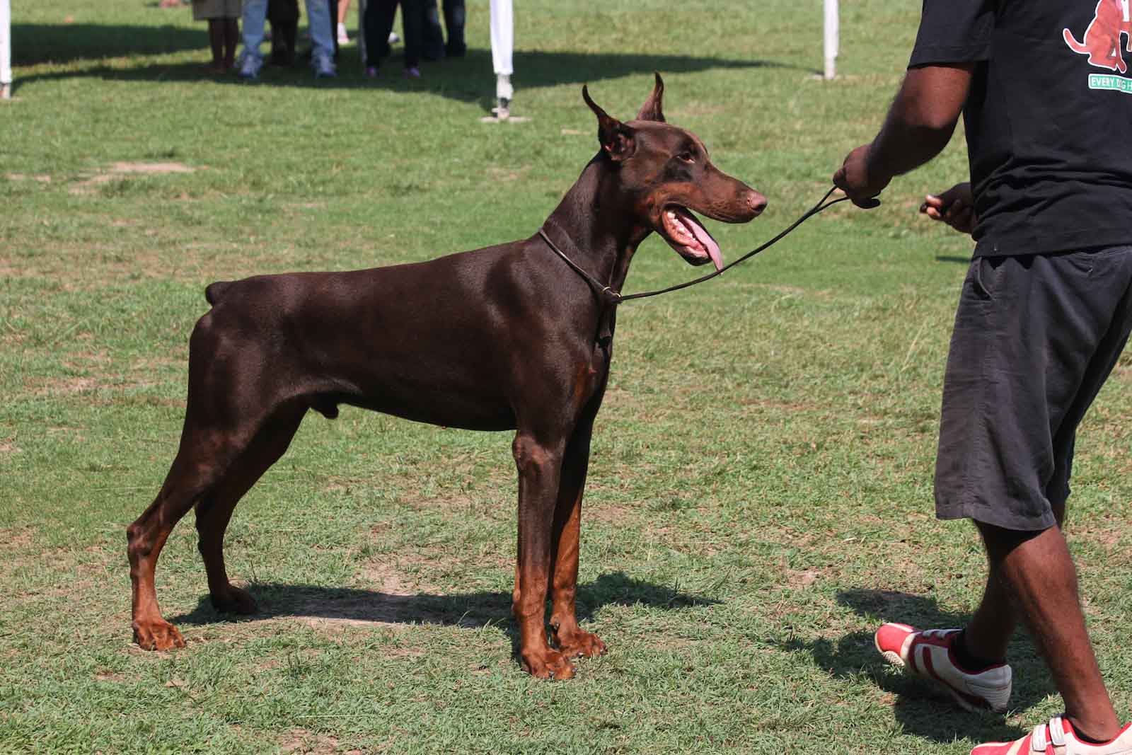 Opinions on my Dobe-img_1607.jpg