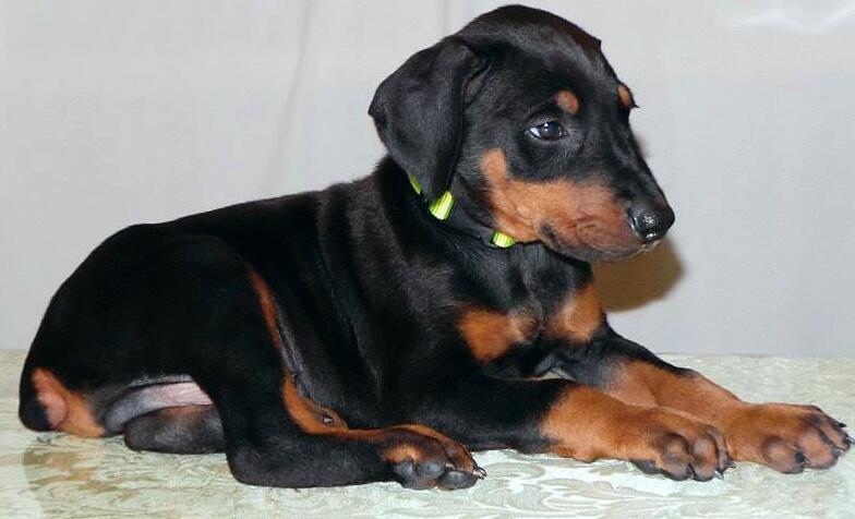 Looking for a breeder in GA or AL-img_20140308_052950.jpg