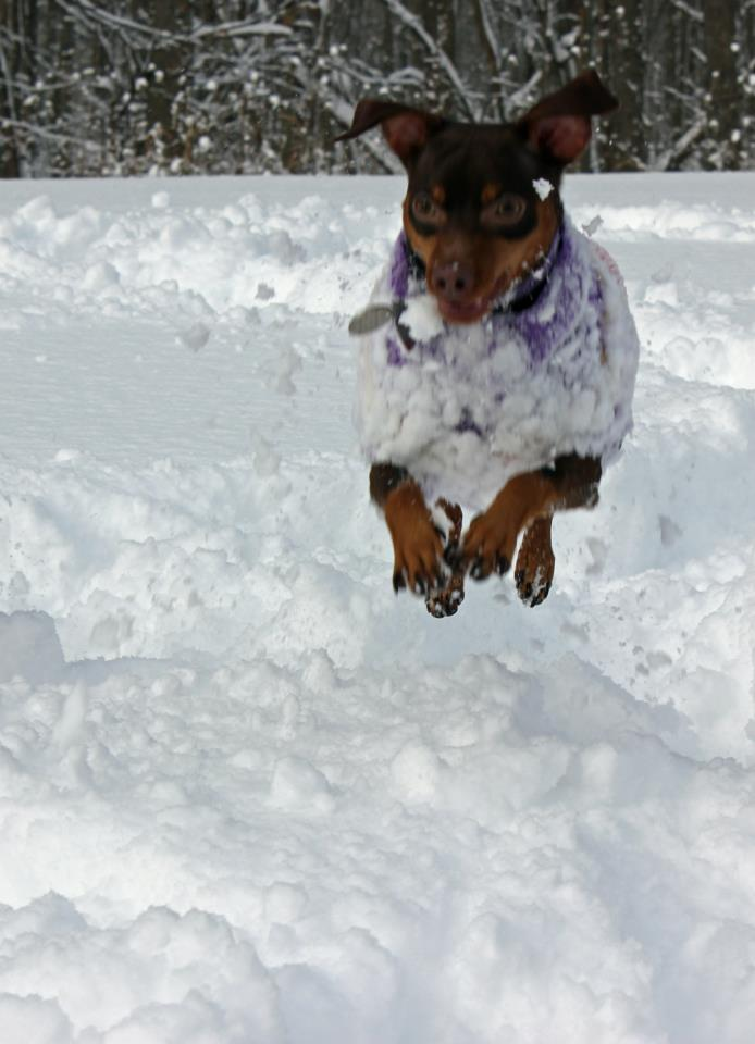 Adding a Dobe to our MinPin Pack-miainflight.jpg