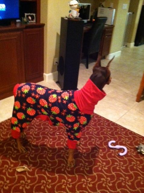 Nala got her first PJs!!-nala-pjs-v3-2012.jpg