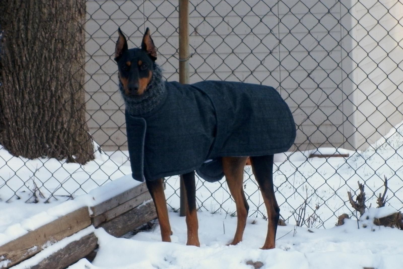 Winter coats and rain slickers - Doberman Forum : Doberman