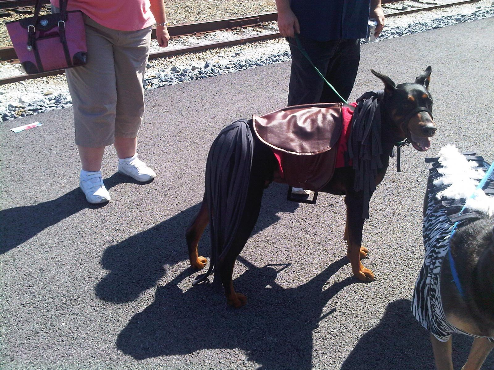 Click image for larger version Name pics 098.jpg Views 6983 Size & Dog Halloween Costumes - Page 2 - Doberman Forum : Doberman Breed ...