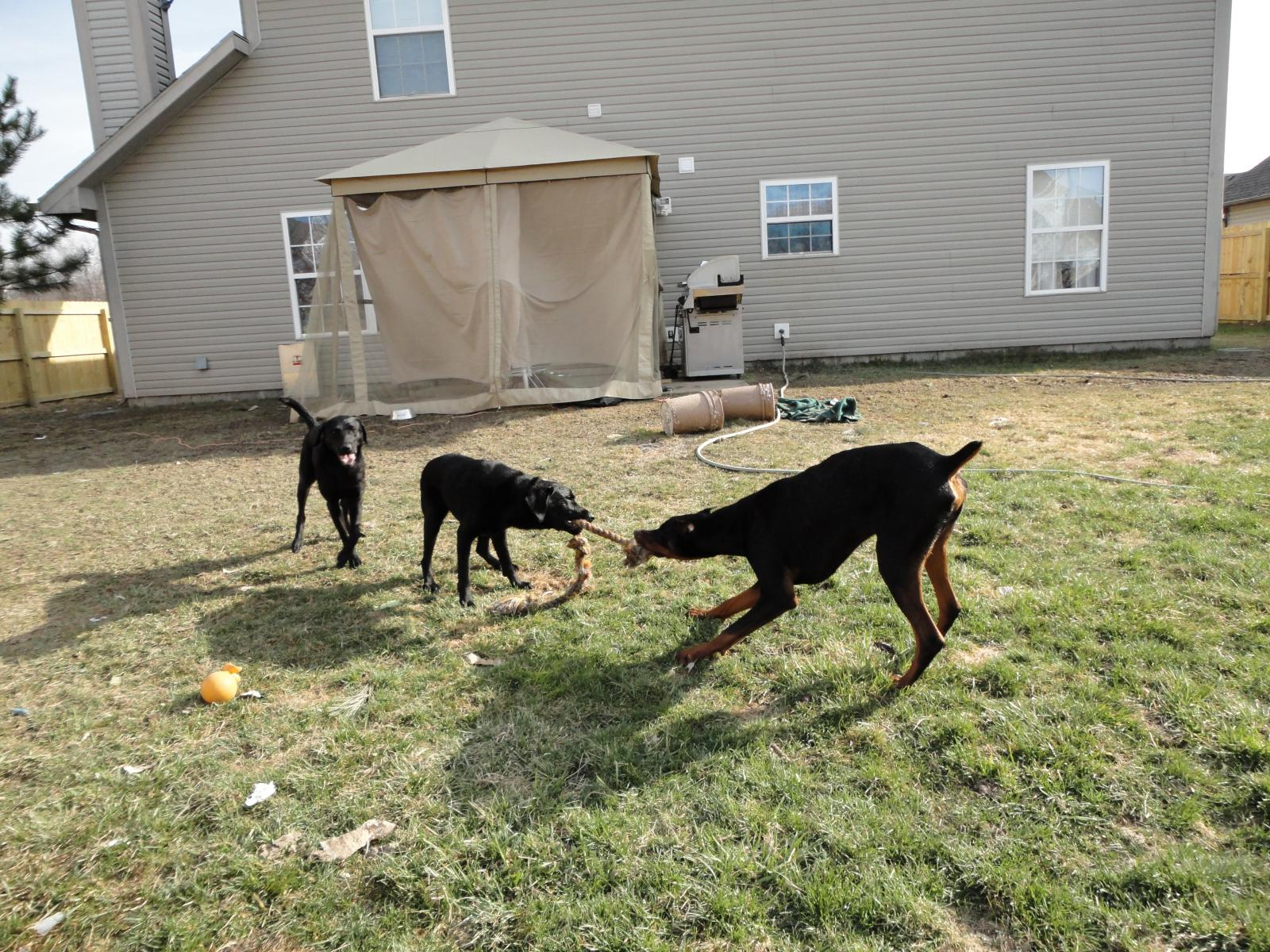 New Dobie Owner from Indy-playing-dielsel_2_10_01.jpg