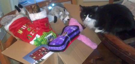 2012 SS/elves PHOTOS & comments reveal-santa-elves-gifts-so-calif-6-cat-jealous.jpg