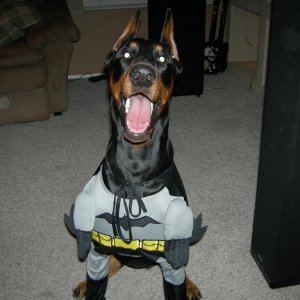 Batman to the rescue!