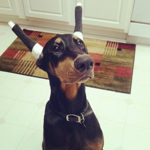 Taped Ears!