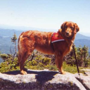 Ginger in Adirondacks