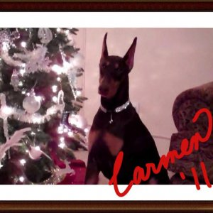 Carmen Christmas Photo 2011