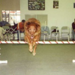 Jumping Ginger