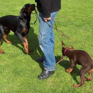 southwest dobe club
