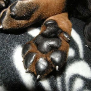 Non Barking B-litters Footprint.. :)