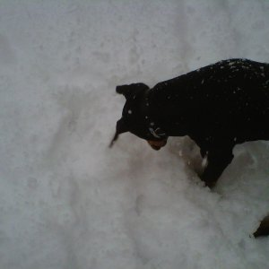 Digging Through The Snow :)