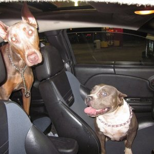 Zeike & Queen Isis' Car Ride Home