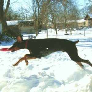 Lars Playing In Snow 2-2-11