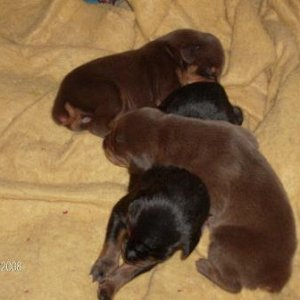 Three Of Four Puppies