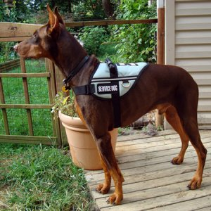 A Dobe With A Job (well Training For A Job)