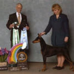 Kenya Earns Best Puppy In Specialty