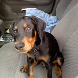 Ruger In The Car