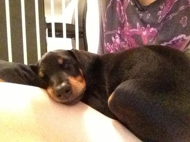 8 Week Old Mika