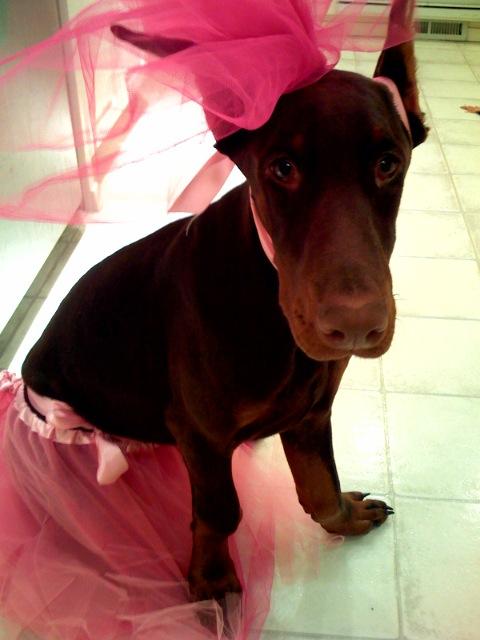Addie Ready to Dance