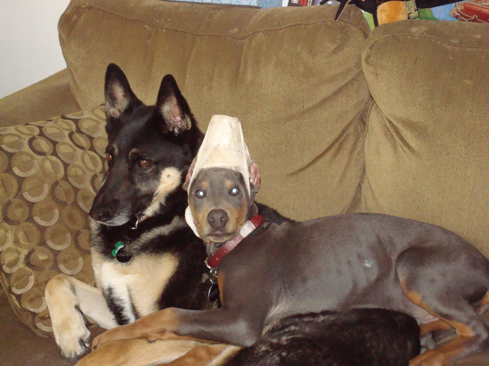 Apollo And Logan