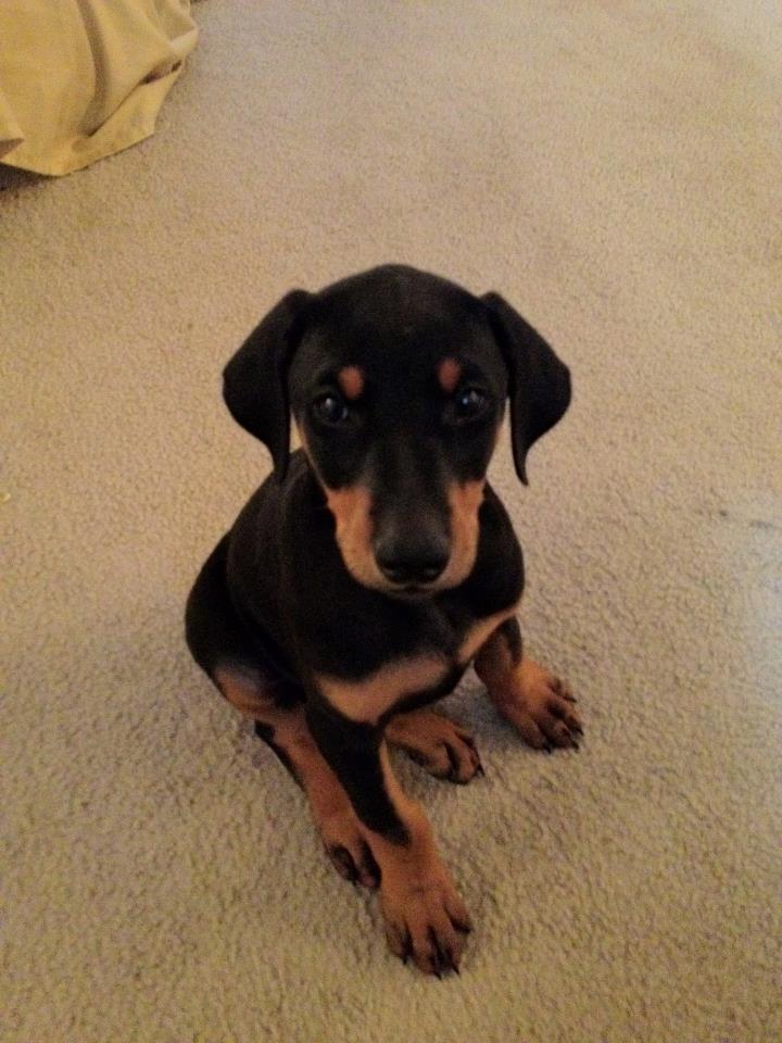 Ava The Puppy