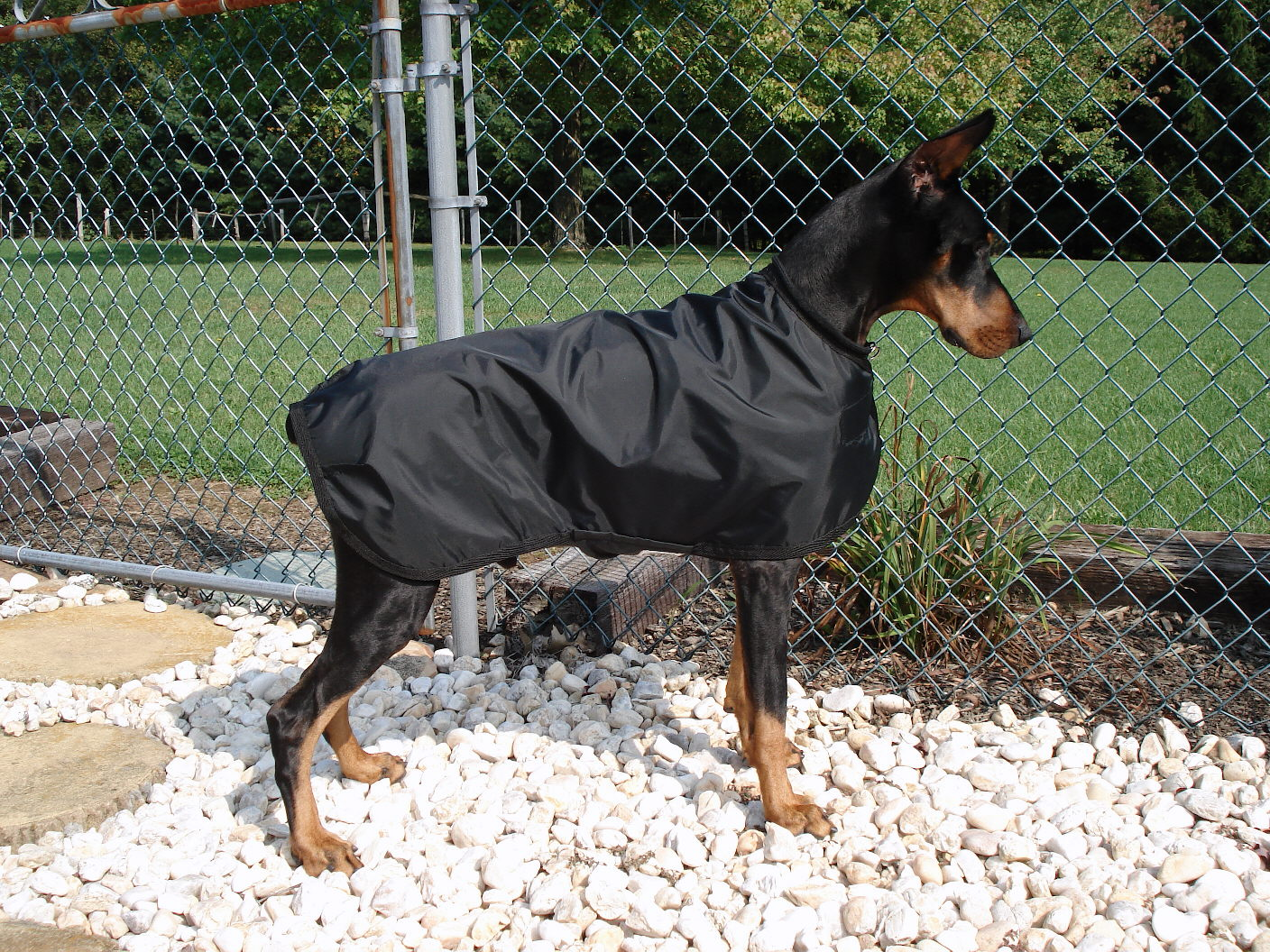 Baron's New Raincoat